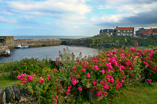 Craster, Northumberland