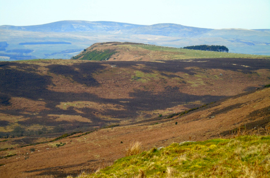Eastern Cheviots from Eglingham Moor